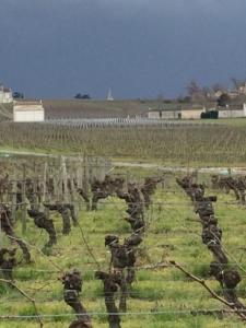Château Champion - vue du vignoble